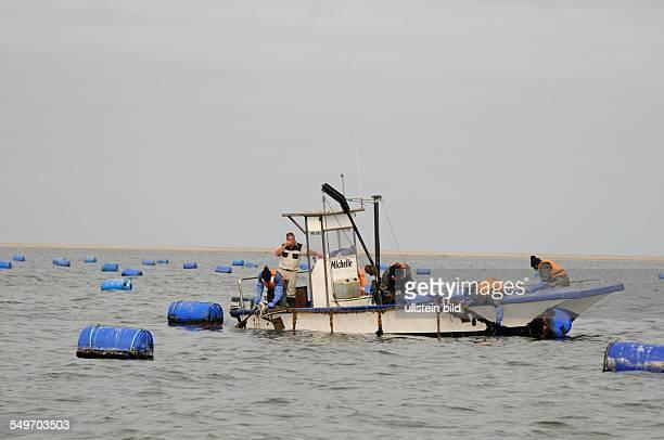 Afrika Namibia Walvis Bay Fischerboot mit Austernfischern