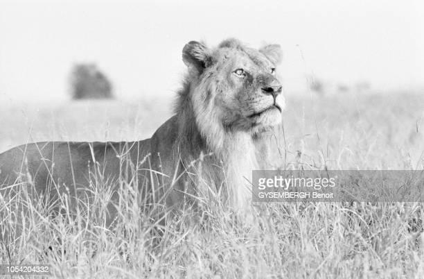 Afrique 1989 Pendant six mois le photographe Benoît Gysembergh a traqué à travers continents et océans la ligne imaginaire qui partage le monde...