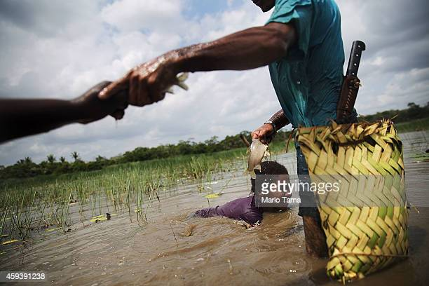 AfroBrazilians fish with traditional methods practiced for centuries in a wetland area of a deforested section of the Amazon basin on November 21...