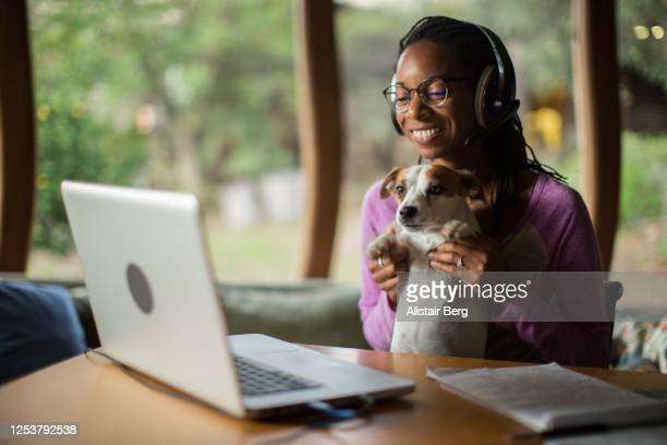 afro-caribbean woman playing with pet dog, while working from home during the covid lockdown - animal stock pictures, royalty-free photos & images
