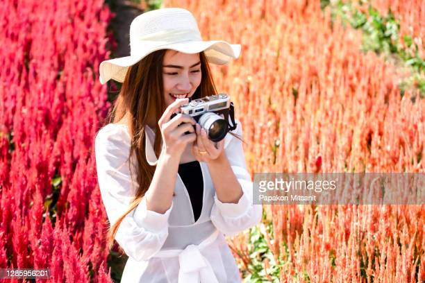 after creating the fever flower garden phenomenon in chiang mai last year for i love flower farm to visit chiang mai recently, the garden has revealed the atmosphere of a red flower field, which is the same flower planted in hokkaido, japan. it is the mo - light natural phenomenon stock pictures, royalty-free photos & images