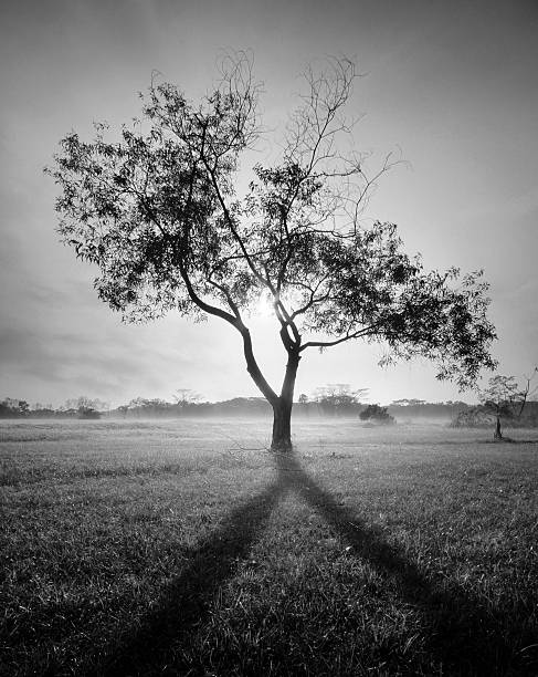 After life tree