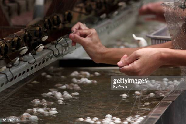 After the cocoon is cooked the yarn starts to be processed by semiautomatic machine at silkworm farm at Sutera House Bogor West Java Indonesia...