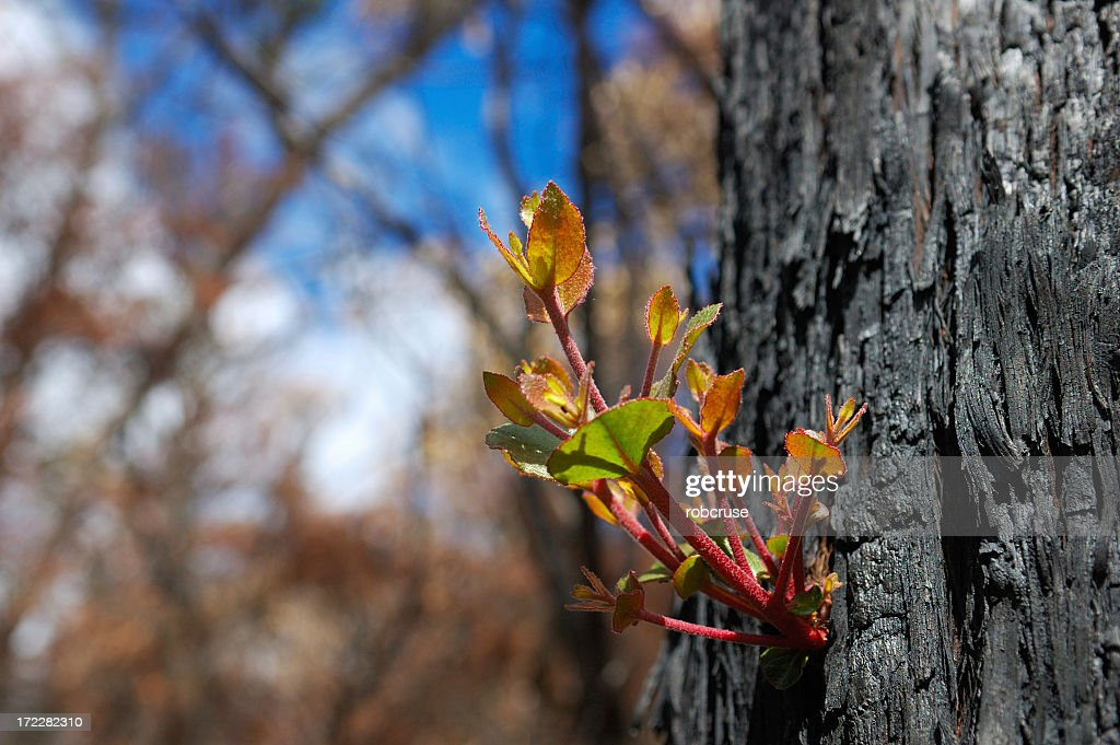 After the Fire : Stock Photo