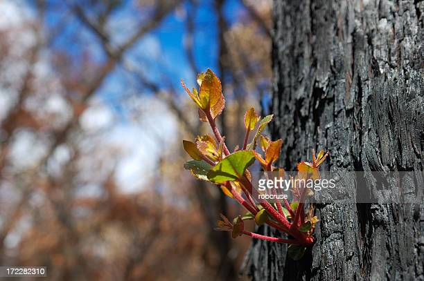after the fire - australian bushfire stock pictures, royalty-free photos & images