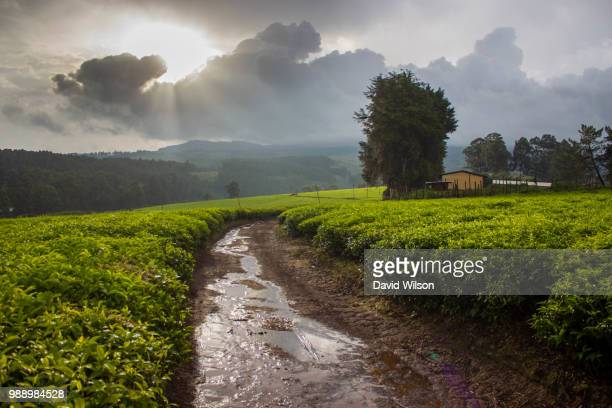 after the rain - cameroon stock pictures, royalty-free photos & images