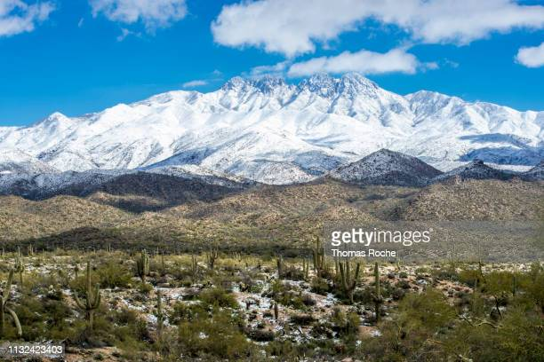 after the snow storm in the arizona desert - scottsdale arizona stock pictures, royalty-free photos & images