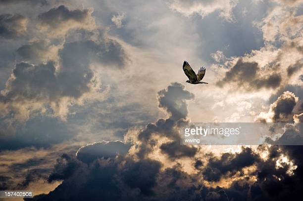 after the storm. - hawk stock photos and pictures