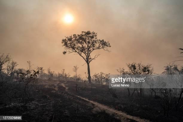 aftermath of fire in brazilian savannah (cerrado) 4 - cerrado stock pictures, royalty-free photos & images