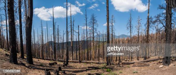aftermath of the 2019 museum fire - jeff goulden stock pictures, royalty-free photos & images