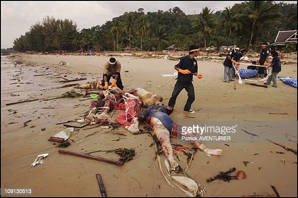 Aftermath Of The Tsunami That Hit The Khao Lak Bay Thailand On December 28 2004 In Khao Lak Thailande
