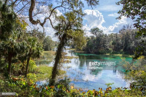 afternoon at rainbow springs - estuary stock pictures, royalty-free photos & images