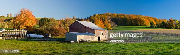 Afternoon in Autumn with Red Barn and Cornfield