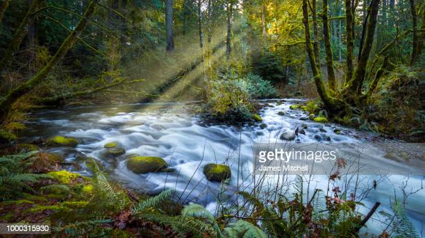 afternoon in goldstream park - brook mitchell foto e immagini stock