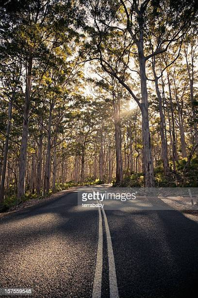 Afternoon Sun Lonely Road