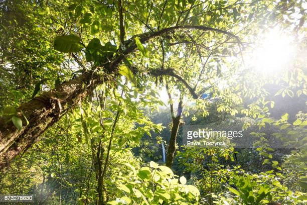 Afternoon sun over La Fortuna Waterfall in Arenal Volcano National Park, Costa Rica