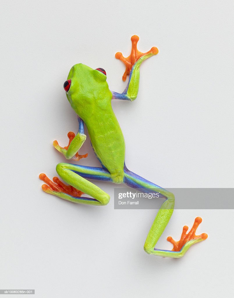 Tree Frog Stock Photos and Pictures | Getty Images