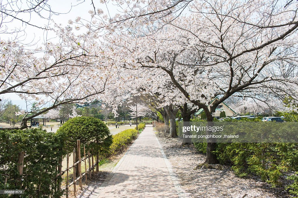Agatanomori Park, Matsumoto City. : Stock Photo