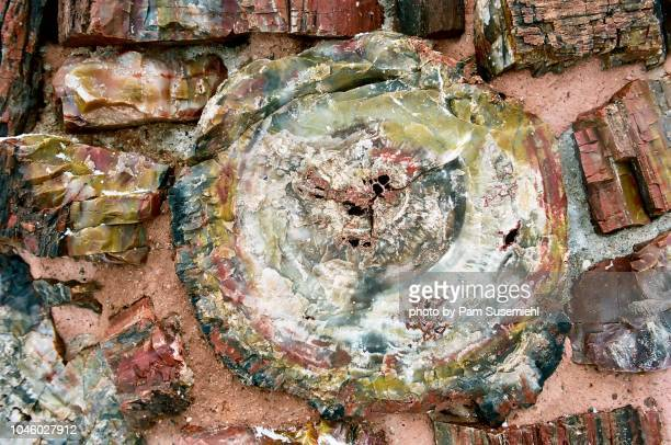 agate house close-up of petrified wood - petrified wood stock pictures, royalty-free photos & images