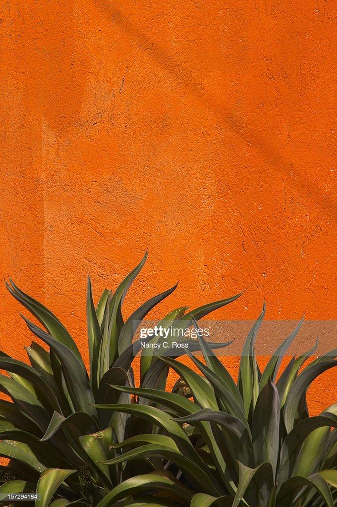 Agave, Cactus, Arancio vivido Stucco muro, verde, verticale, copia-spazio : Foto stock