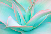 https://www.istockphoto.com/photo/agave-leaves-in-trendy-pastel-neon-colors-gm909651510-250543776