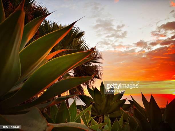 agave sunset - agave fotografías e imágenes de stock