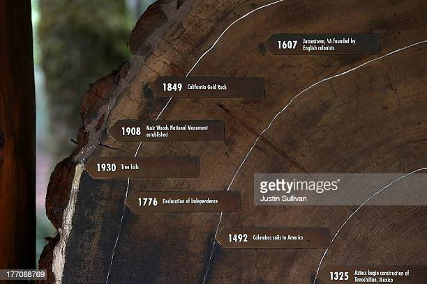 Age rings are shown on a cut section of a Coastal Redwood tree at Muir Woods National Monument on August 20 2013 in Mill Valley California A fouryear...