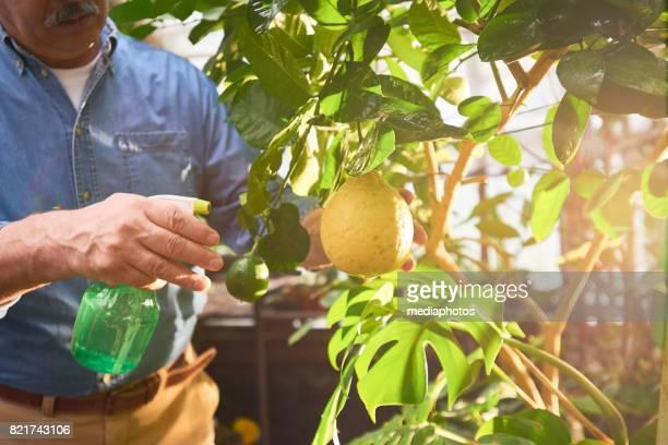 Aged Man Working in Garden