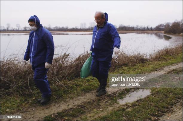 Agents of the Conseil Superieur de la Peche collect dead birds to deliver them to the Laboratoire Departemental de l'Ain where they will be analysed...