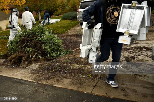 DEA agents pack away marijuana plants and lights that were laid out to photograph and video for evidence during coordinated raids on illegal in home...