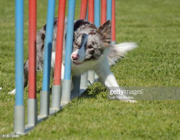 agility course