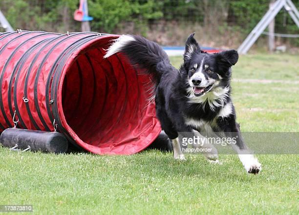 Agilität Hund