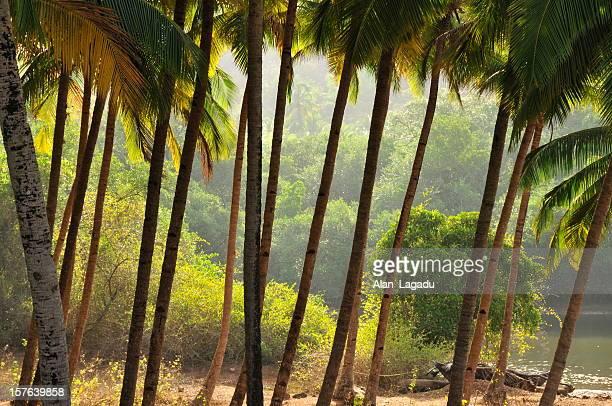 agonda,goa,india. - goa stock photos and pictures