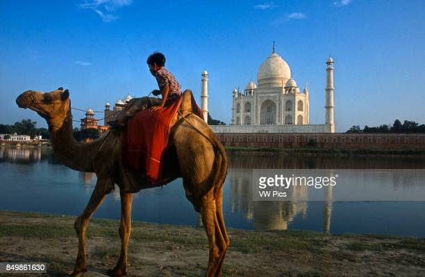 Agra Uttar Pradesh India Camel and Indian boy beside the river at the Taj Mahal in Agra An Indian boy with his camel rides on the banks of the Yamuna...
