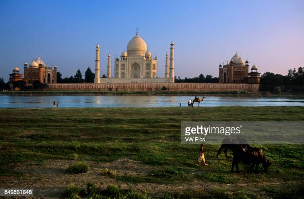 Agra Uttar Pradesh Taj Mahal in River Yamuna Agra India The Taj Mahal is a mausoleum located in Agra India built by Mughal Emperor Shah Jahan in...