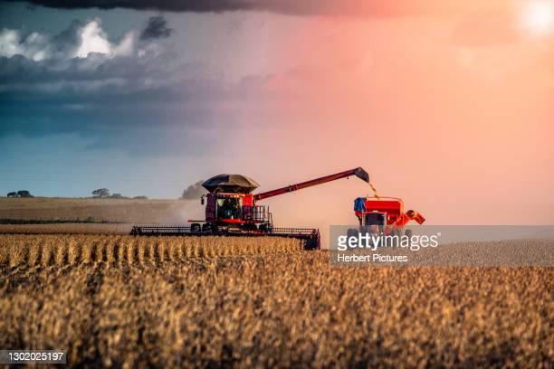 agribusiness: harvest soybean, agriculture - agricultural harverster machine - agribusiness: soybean harvesting, agricultural harvester machine. - estado do mato grosso imagens e fotografias de stock