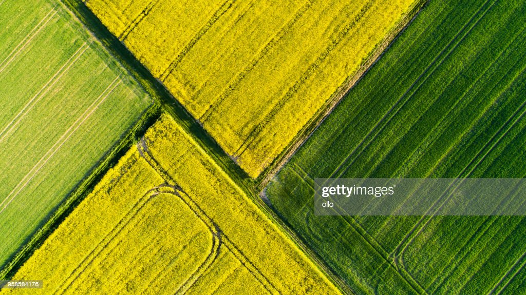 Agricultural area in spring : Stock Photo