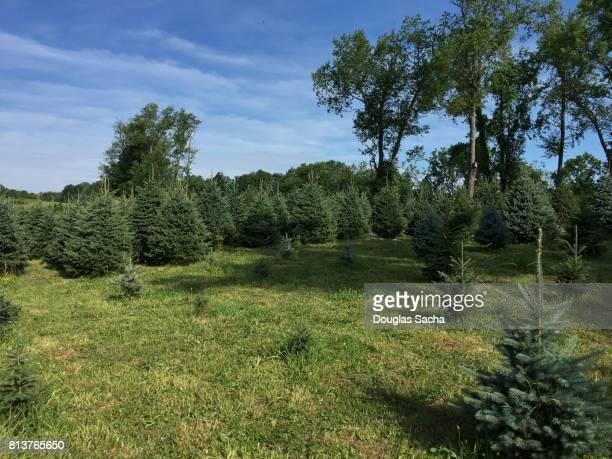 Agricultural Christmas Tree Farm