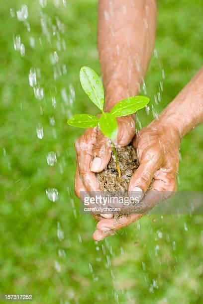 Landwirtschaftliche conservation mit Baum Setzlinge