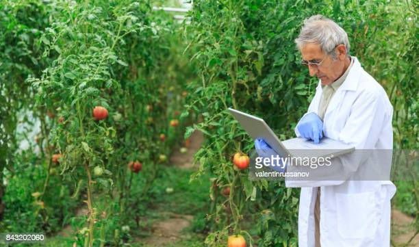 agricultural engineer using laptop in greenhouse - photosynthesis stock photos and pictures