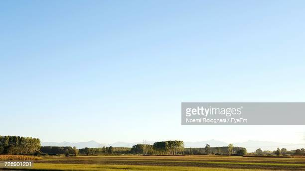 agricultural field against clear blue sky - noemi foto e immagini stock