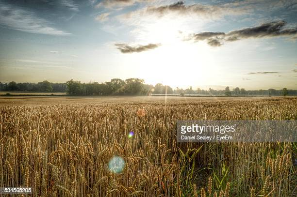Agricultural Field Against Sky During Sunny Day