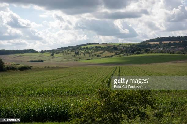 Agricultural field at Pont-à-Mousson, Meurthe-et-Moselle department, France