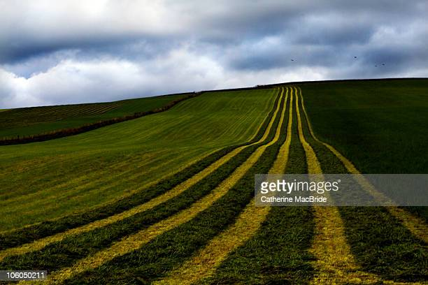 agricultural field  - catherine macbride stock pictures, royalty-free photos & images