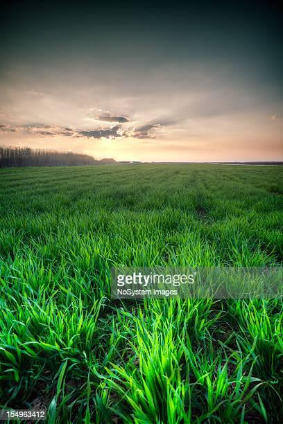 Landwirtschaftliches field