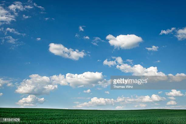Agricultural fields and clouds