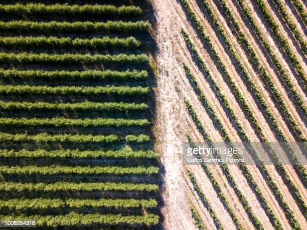 agricultural fields - wine harvest stock pictures, royalty-free photos & images
