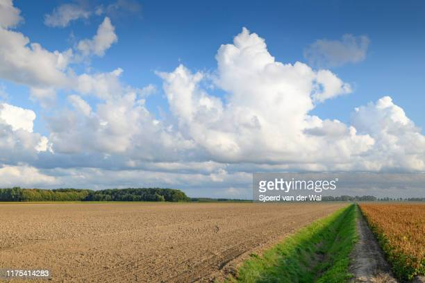 """agricultural fields under a sky with impressive clouds after a summer thunderstorm - """"sjoerd van der wal"""" stock pictures, royalty-free photos & images"""