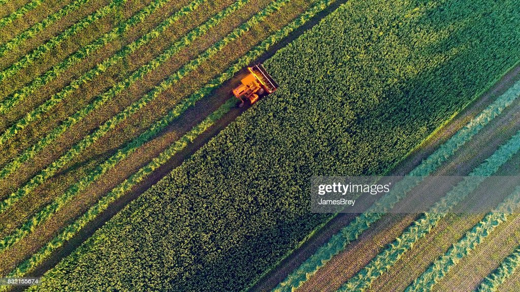 Agricultural harvesting at the last light of day, aerial view. : Stock Photo