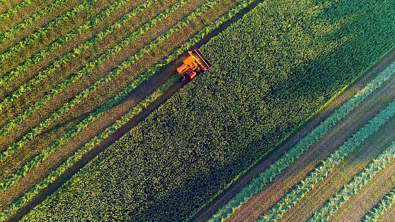 Agricultural harvesting at the last light of day, aerial view. 832155674